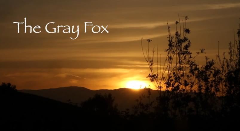 The Gray Fox Video